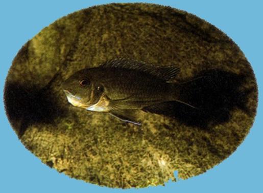 Презентация по биологии 7 класса на тему «Рыбы»