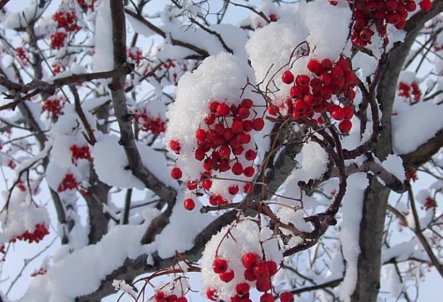 Сочинение для 7 класса на тему «Зима».