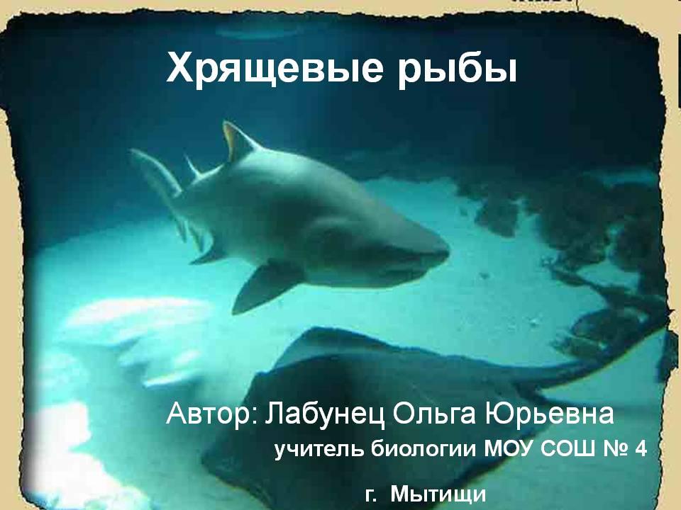 Презентация по биологии 7 класса на тему «Хрящевые рыбы»