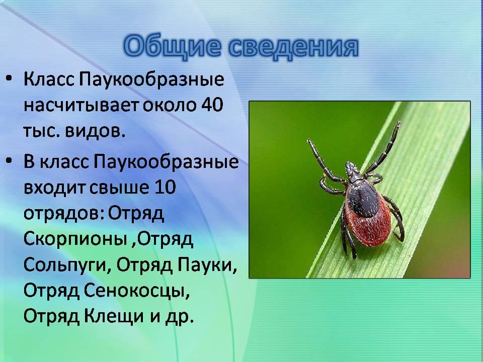 Биология 7 класс презентации по классу паукообразные